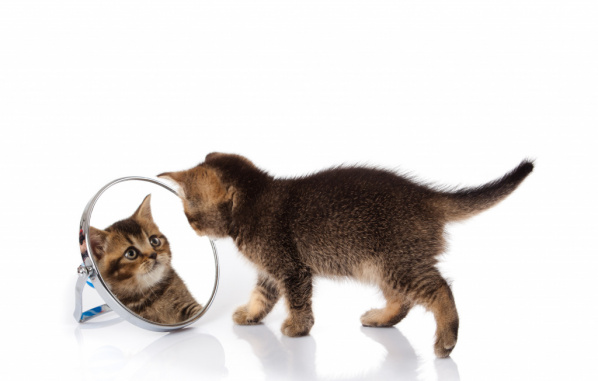 Why do cats groom, cat grooming, grooming cats